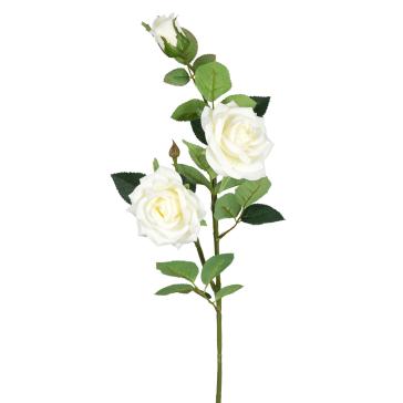 Ветка с белыми розами