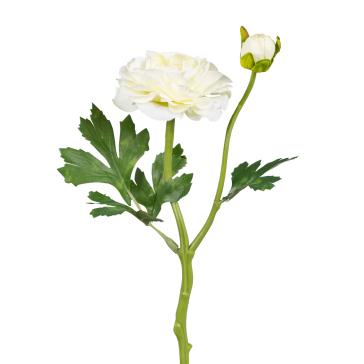 Пионовидная белая роза с бутоном